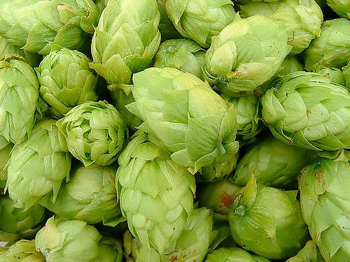 cascade-hops